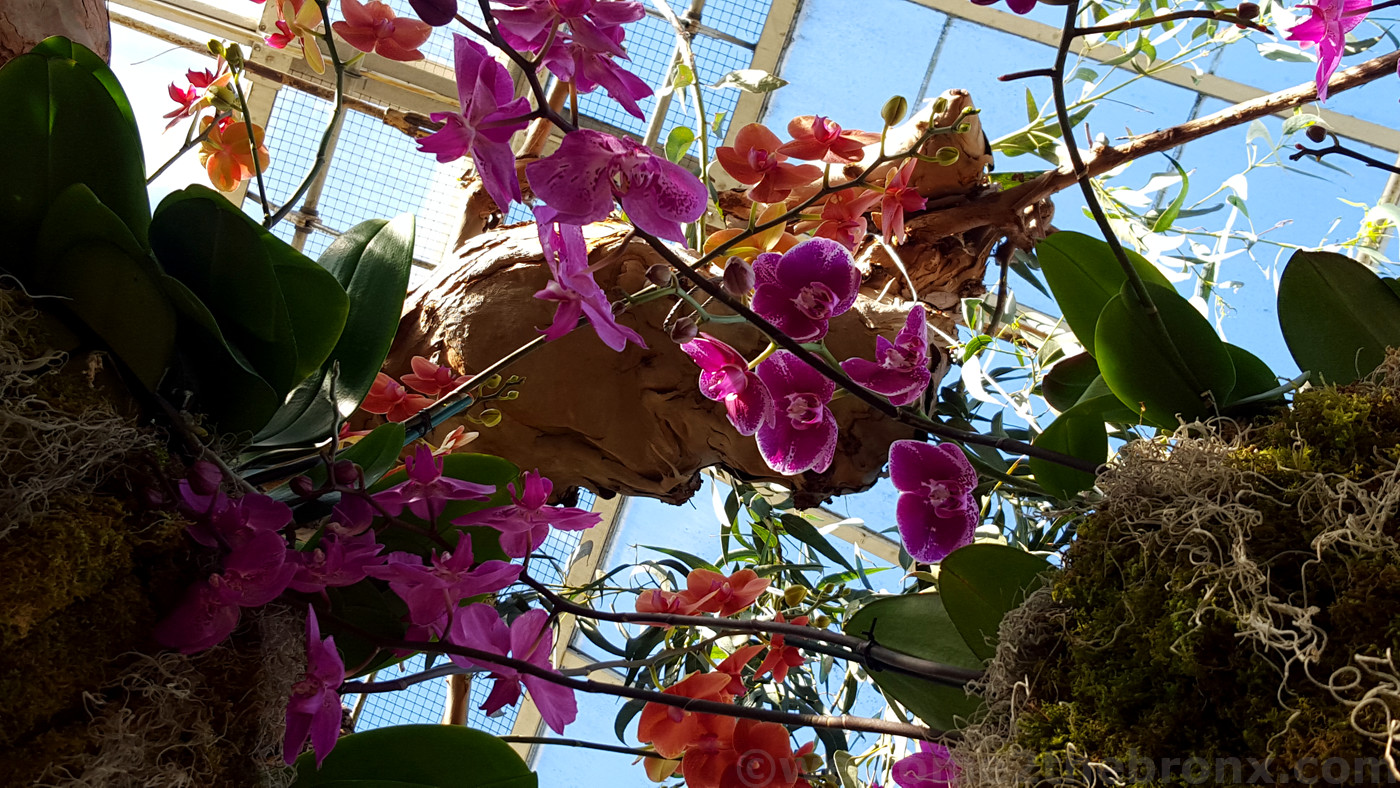 a riot of color awaits as the orchids are back in u0027orchidelirium