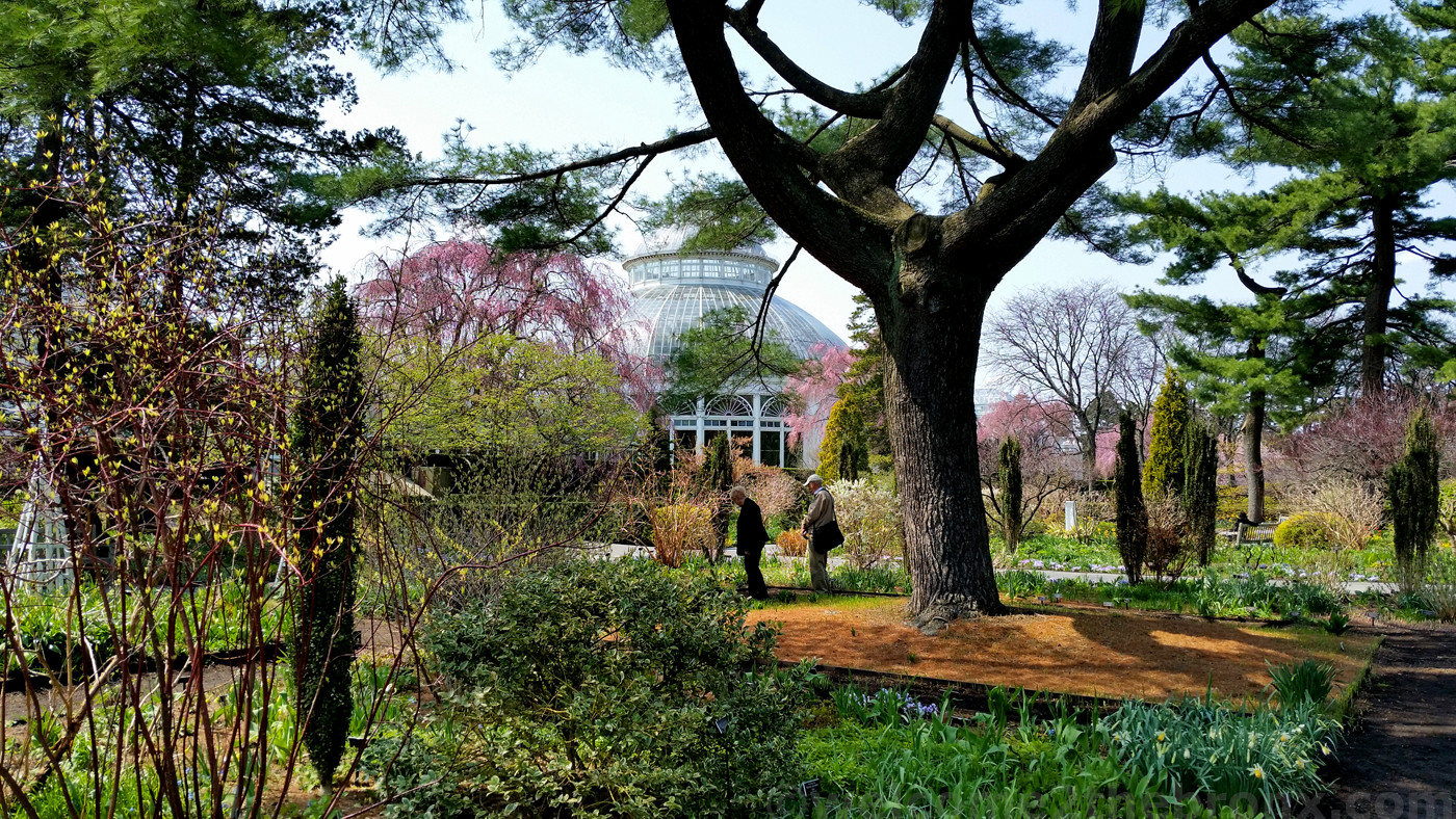 Help Make The Bronx 39 S New York Botanical Garden 1 Welcome2thebronx